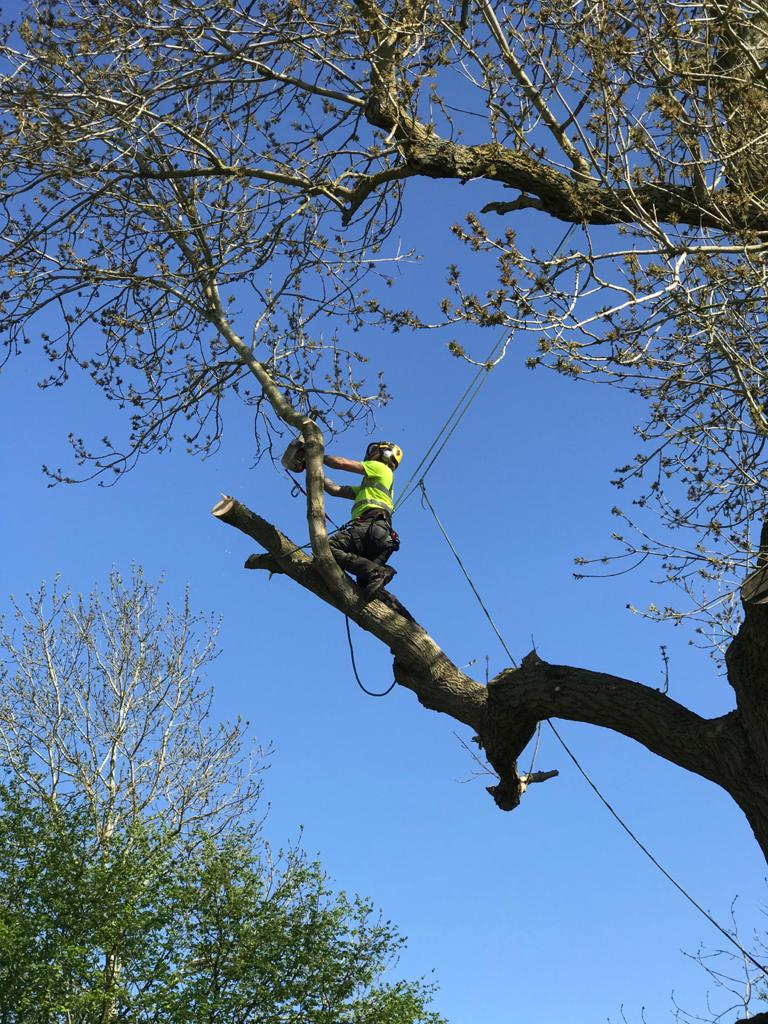 domestic services man up tree