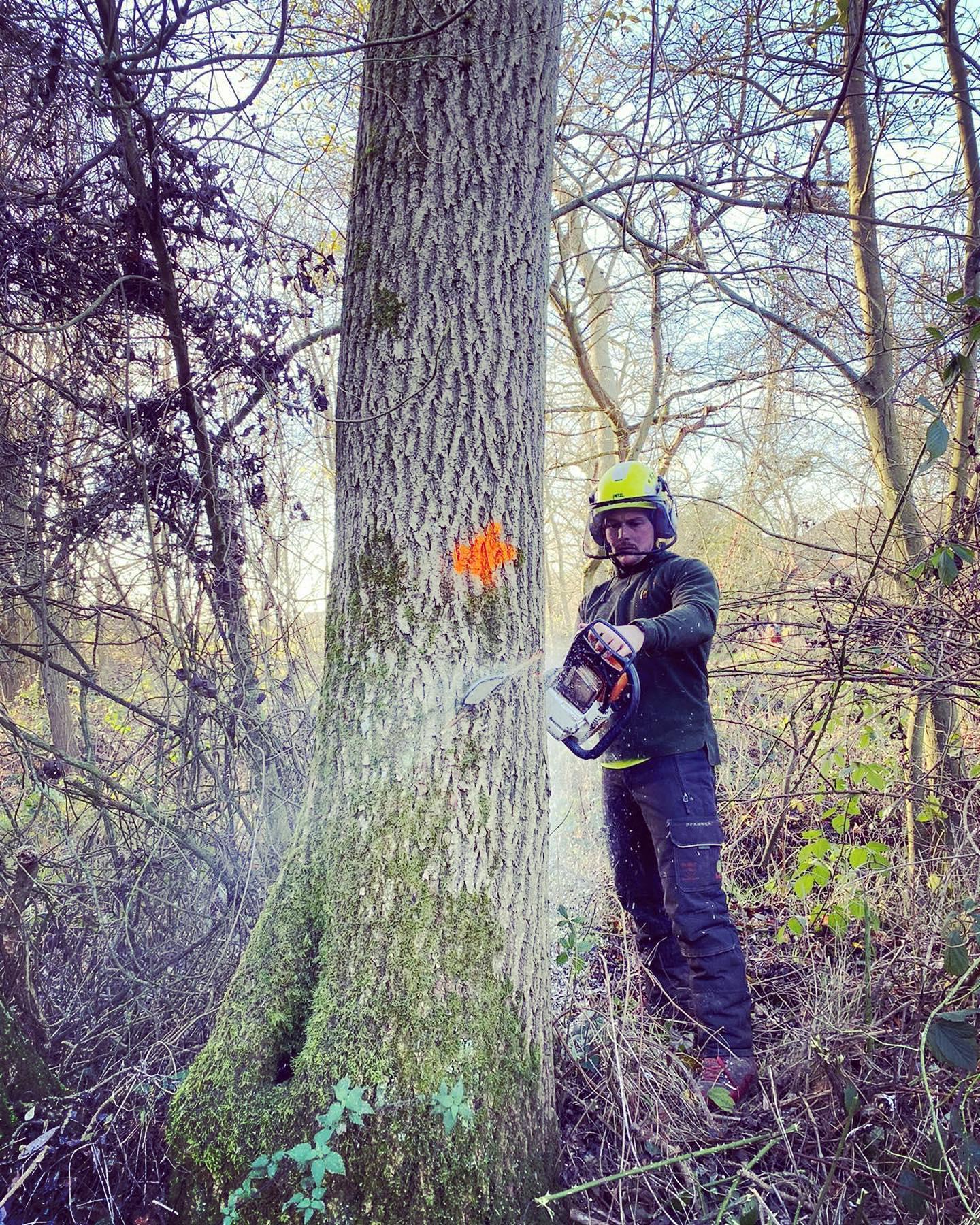 tree cutters near me