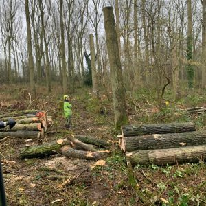 woodland management service