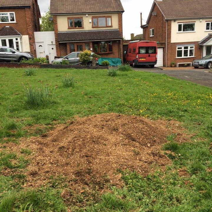 Removed Tree Stump. dirt mound on grass area